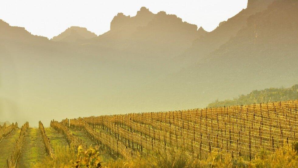 Driehoek Wines