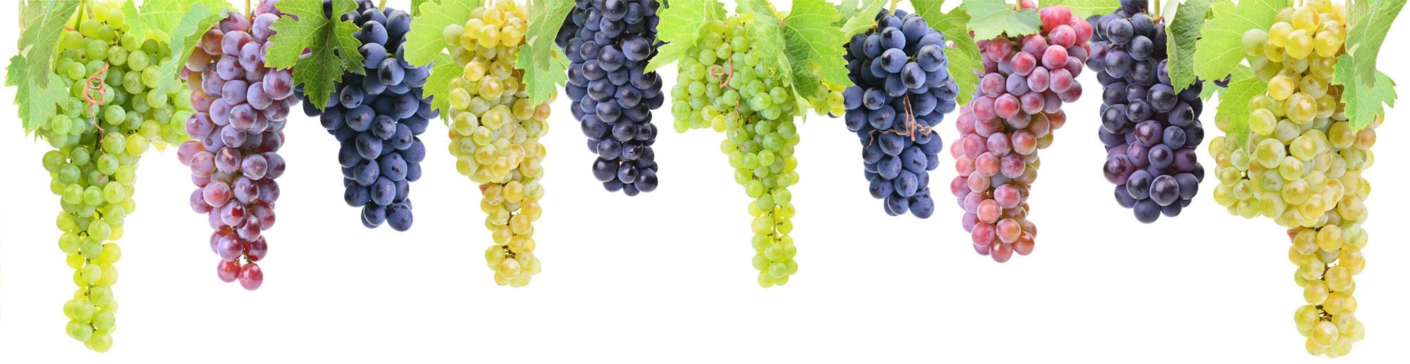 Rebsorten rotwein
